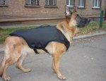 Штурмовые собаки чекистов получили сверхлегкие бронежилеты