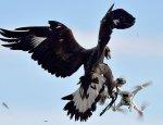 Французские военные привлекли орлов для охоты на беспилотники