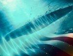 ВМФ США разрабатывает подводный акустический щит