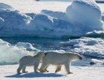 Датчане хотят отхватить кусок российской Арктики