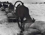 Санный прорыв ленинградской блокады