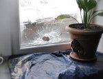 ВСУ обстреляли жилые дома в Славяносербском районе