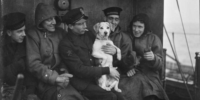 Плуто — боевой пёс, который попал в рай